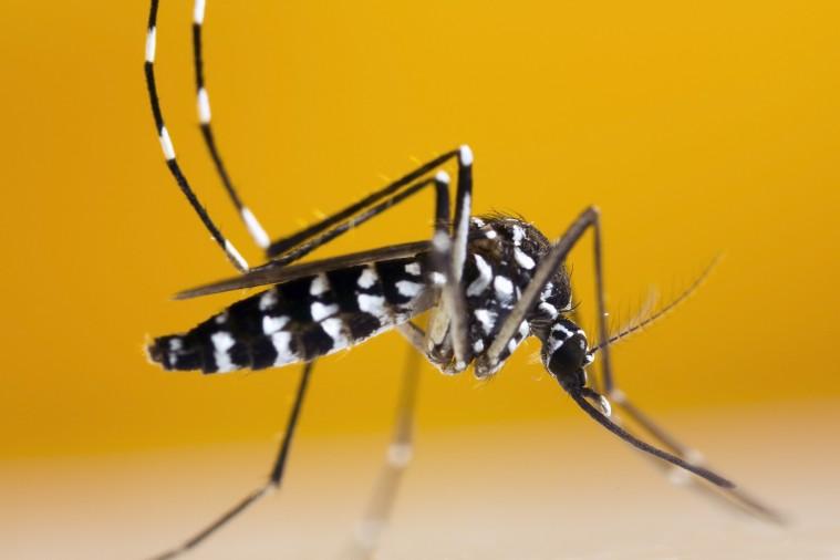 El Chikungunya y su situación en España